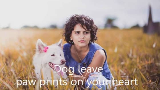 100 [Hilarious] Instagram Good Captions for Dogs