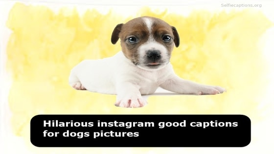 100+[Hilarious] Instagram Good Captions for Dogs Pictures